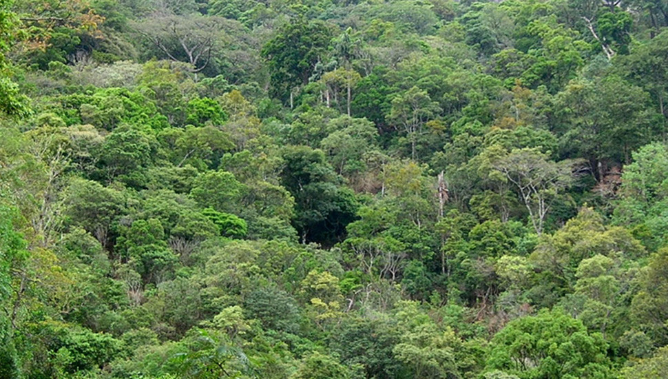 Uproar against Circular Withdrawal…: Scare threatens huge forest land appropriation