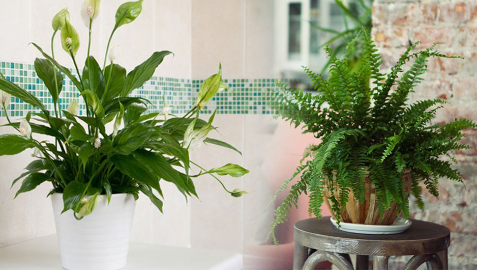 Natural Air Purifiers for Your Home