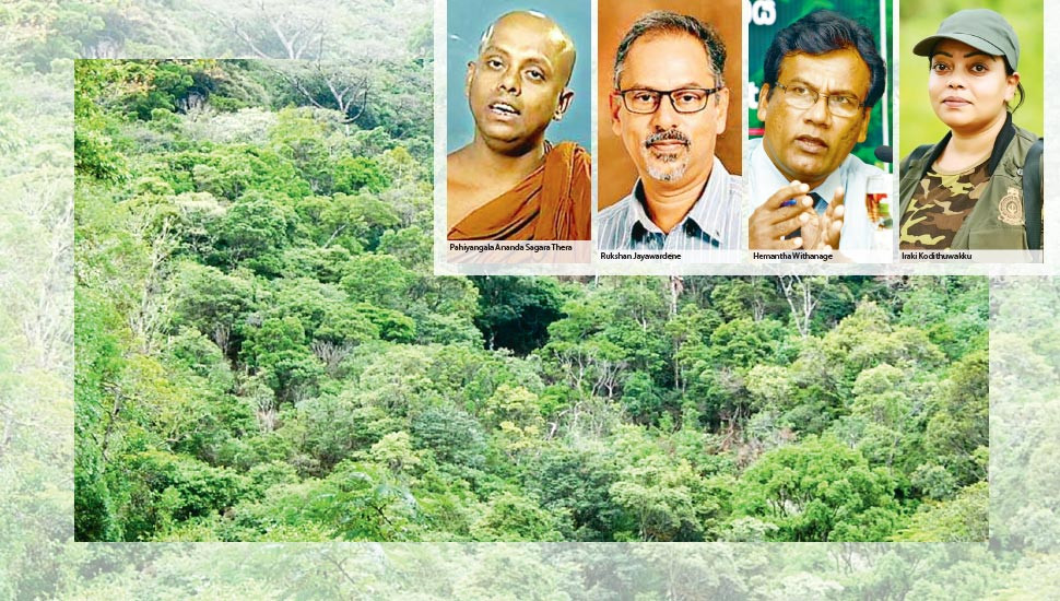 Half a Million Hectares of Forest in Danger