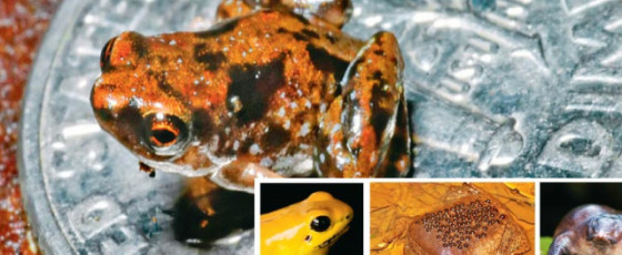 Freaky and Fascinating Frog Facts