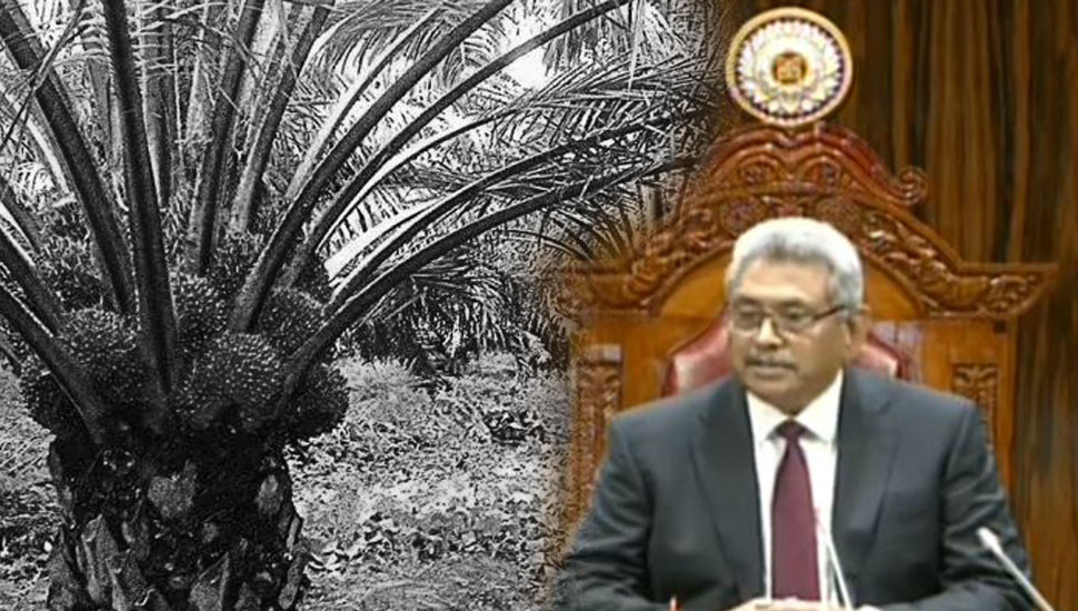 President's policy statement: Palm oil cultivation banned