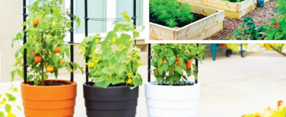 How to Grow Your Own Sustainable Home Garden
