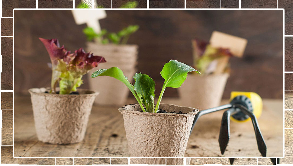 Growing Your Own  Vegetable Garden in Pots
