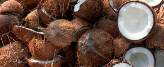 Maximum retail price of coconuts imposed with immediate effect