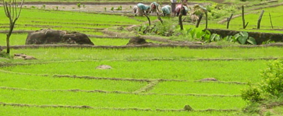 Organic fertiliser project a success; 48,000 hectares to be cultivated next season