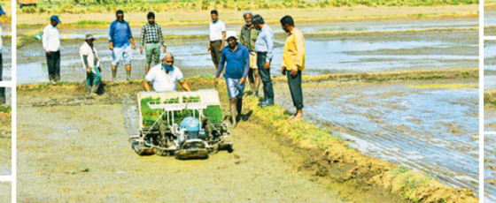 Ampara farmers urged to plant paddy seedlings
