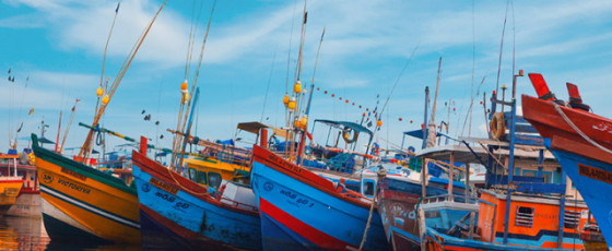 10 fishermen at Beurwala Fisheries Harbour test positive for COVID-19