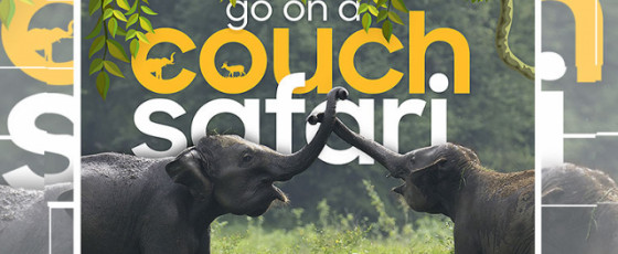 'Go on a couch safari' concept by Sri Lanka Tourism