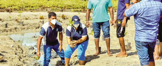 Mangroves must be protected – Premier