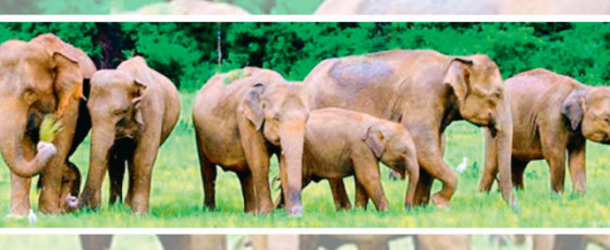 Plans underway to prevent elephants from consuming polythene