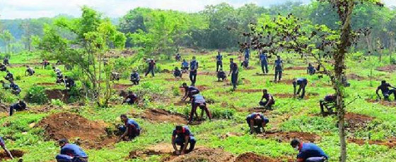 Army plants 100,000 saplings in East