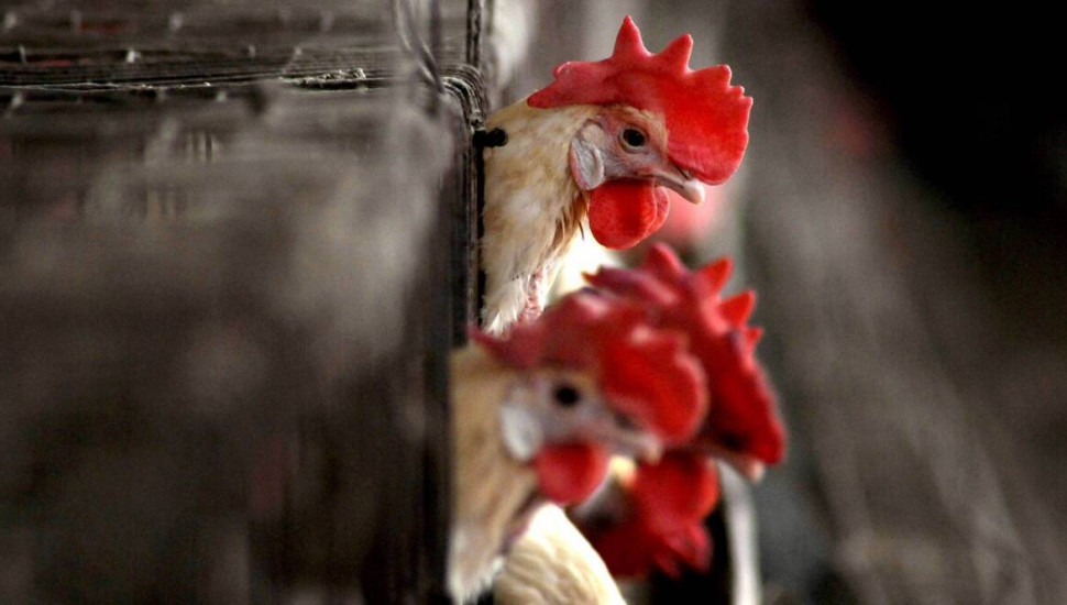 Russia detects first  human infection of  bird flu