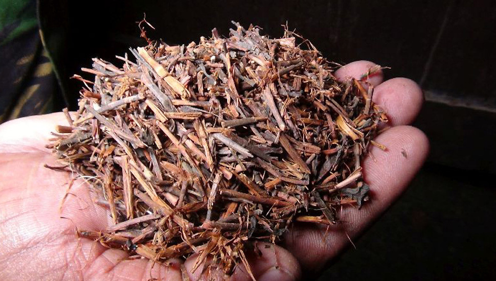 STF arrest two with tea sweepings