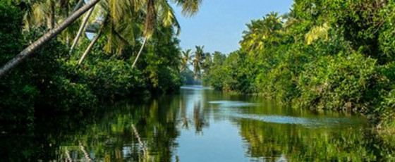 Muthurajawela Wetlands to remain intact: UDA, CEA to take charge