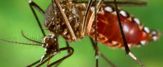 Dengue claims three lives in 2021