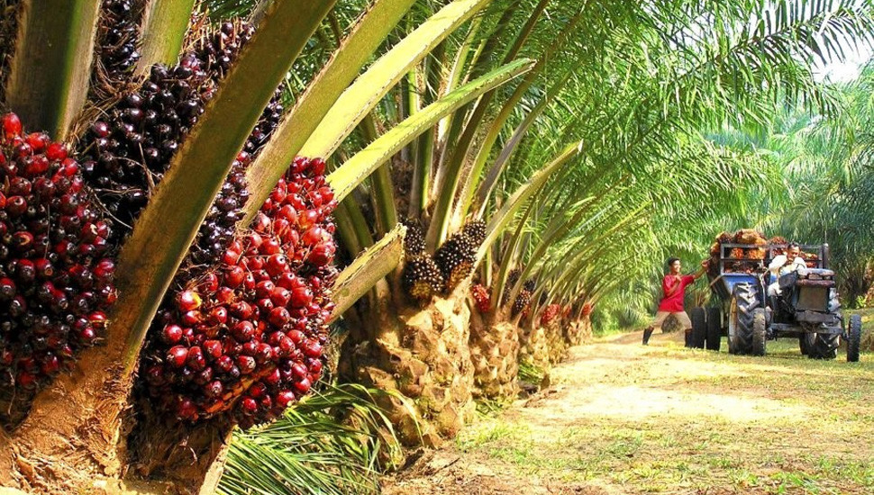 President orders complete ban on Palm Oil import