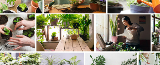 Rules for  Indoor Plants
