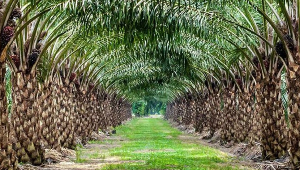 Govt's ban on palm oil imports: Many Industries Face Collapse – Harsha