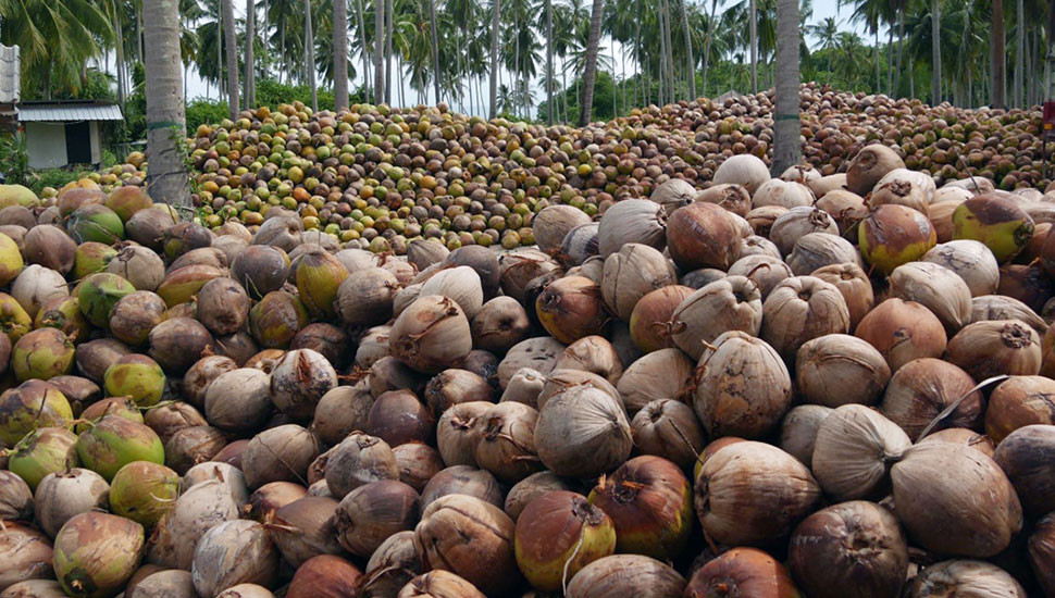 Strengthening Domestic Coconut Industry to Regain its Eminence