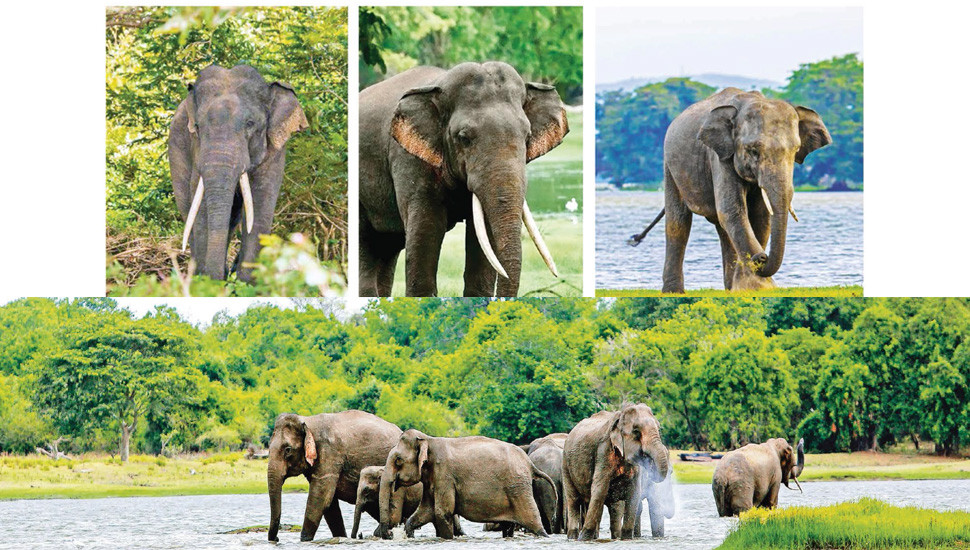 Mystery of the Elusive Tusker