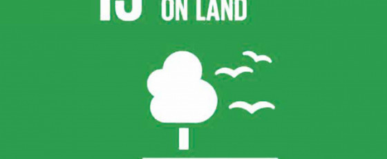 SDG #15: Taking Care of Our Land
