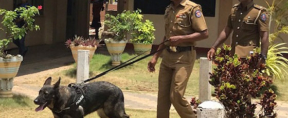 Canines to assist Police Environmental Division operations