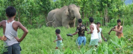 Compensation Increases for Victims of Wildlife Attacks