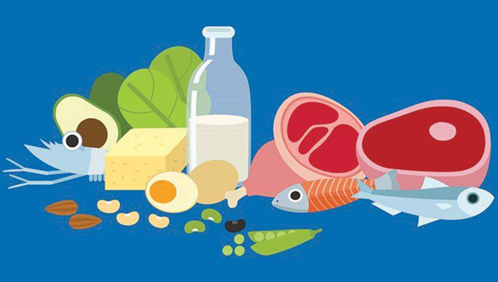 Importance of a Daily Diet Rich in Protein