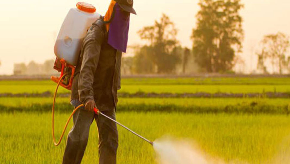 Agrochemical ban may cause 42% crop loss