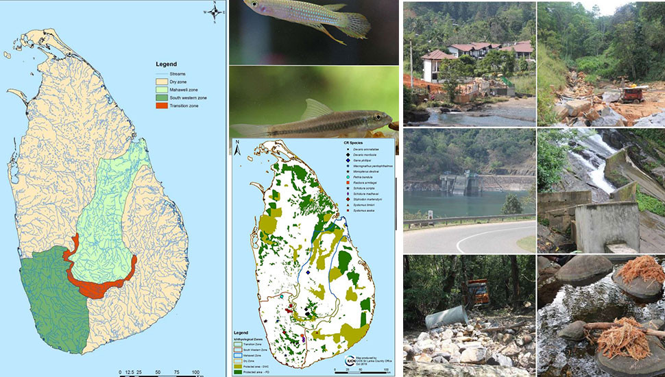 Study Shows 74% of SL's Freshwater Fish Endangered