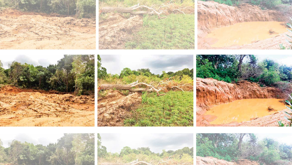 PS Candidate Suspected of Deforestation for Granite Quarries