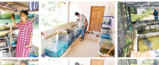 Middle Man Reaps Benefit of Ornamental Fish Trading