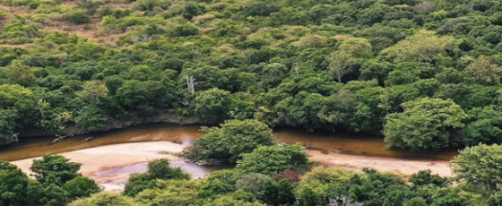 UNDP commends SL's environmental project